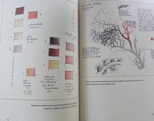 Color swatches & red sea fan